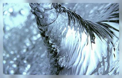 dikkaya-tesisat-hidrofor-dalgic-pompa-izmir-toptan1